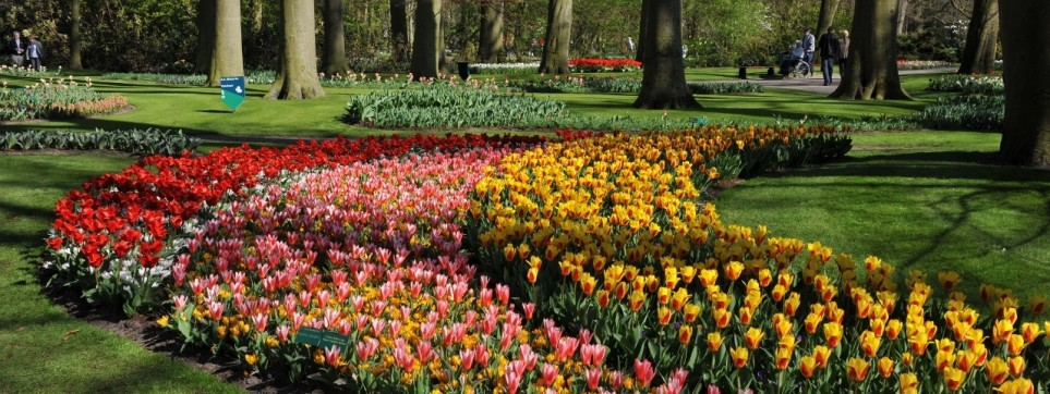 Amsterdam et keukenhof voyages remi for Le jardin keukenhof