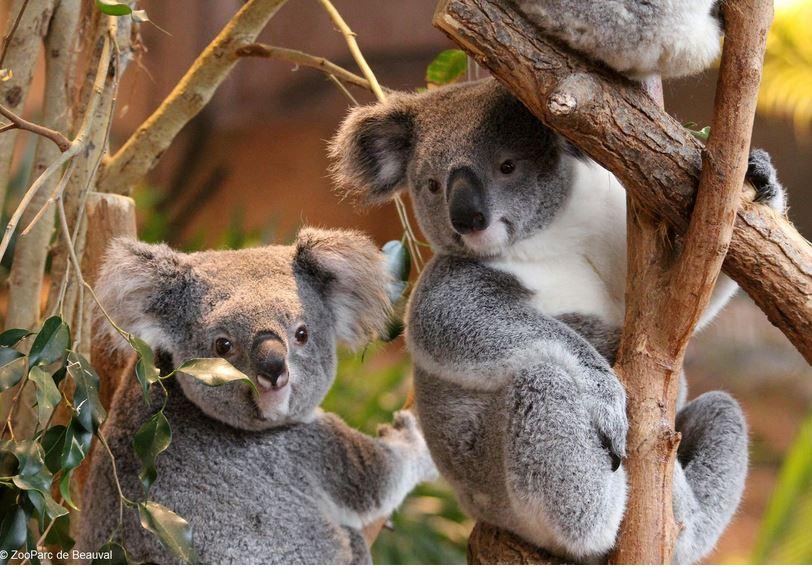 Futuroscope et zoo de beauval voyages remi for Chambre zoo de beauval