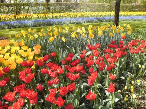 Keukenhof parc floral